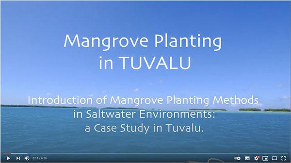 mangrove_in_tuvalu